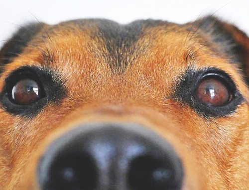 Association Best Practices: Guidelines for Emotional Support Animals